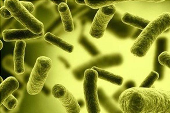 Vi khuẩn Coliform - Mối nguy hiểm trong nước sinh hoạt hàng ngày